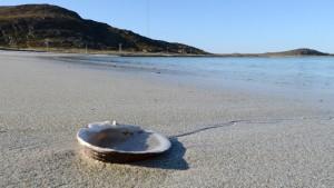 Dette skjellet kan være så gammelt som 300 år - og har en lang klimahistorie å fortelle. Det forsøker forskerne nå å finne ut av. Foto: Allan Klo / NRK