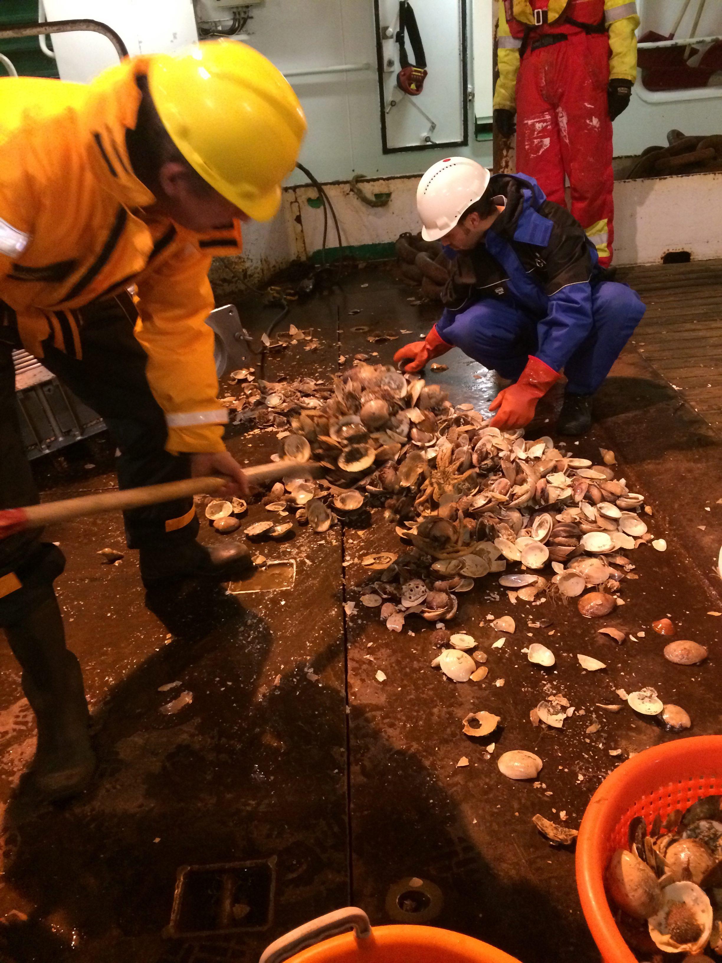 Shovelling Arctica NW2