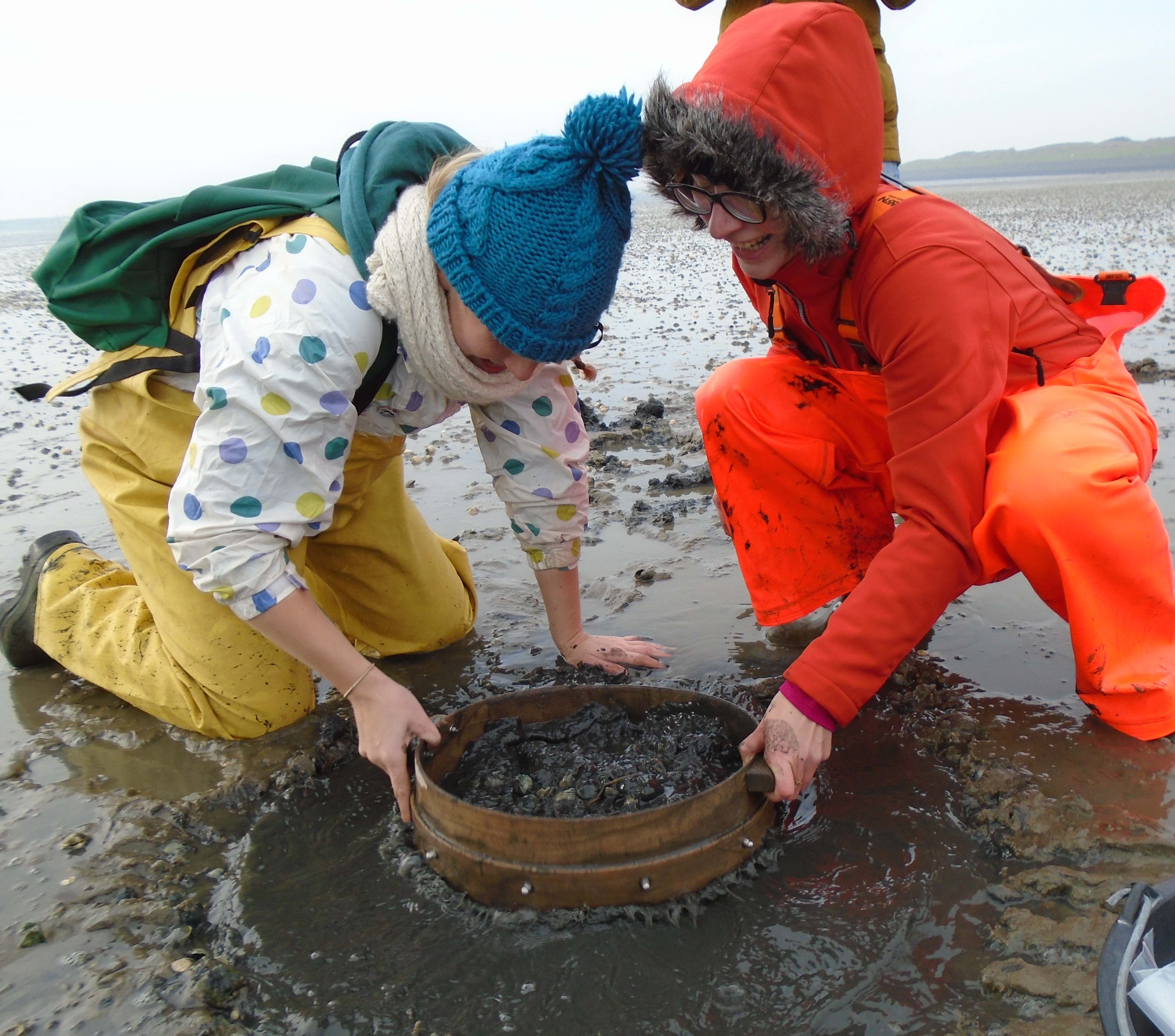 Sieving cockles